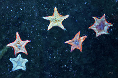 Photograph - Five Starfish by David Gordon