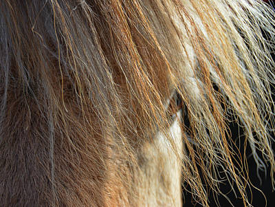 Photograph - Fjord Forelock by Jamart Photography