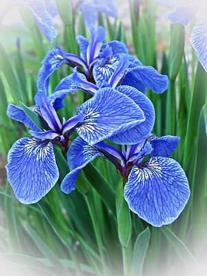 Photograph - Flag Iris Blues by MTBobbins Photography
