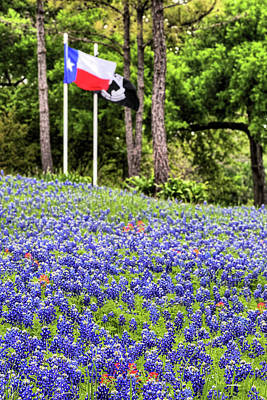 Photograph - Flags And Bluebonnets by JC Findley