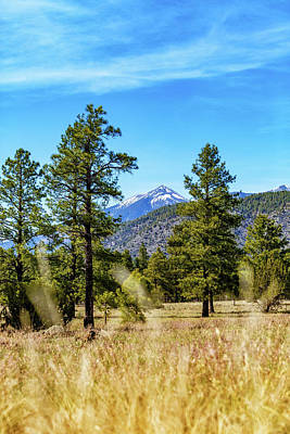 Photograph - Flagstaff Arizona Park In Woods - Vertical by Susan Schmitz