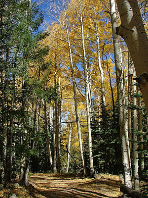 Photograph - Flagstaff Aspen 796 by Mary Dove