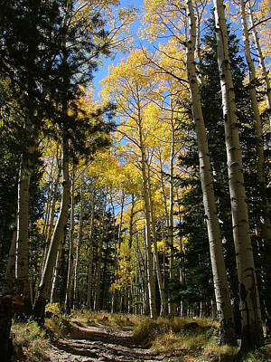 Photograph - Flagstaff Aspens 790 by Mary Dove