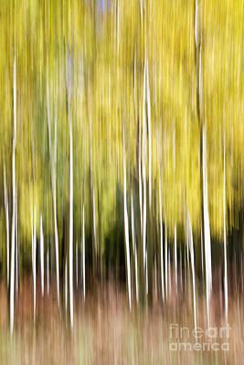 Photograph - Flagstaff Aspens by Bryan Keil