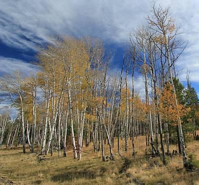 Photograph - Flagstaff Autumn Aspen by Cheryl Dean