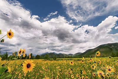 Flagstaff Wildflower Extravaganza Art Print
