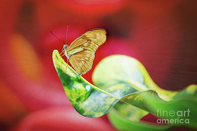 Photograph - Flambeau Butterfly Colorful by Sharon McConnell
