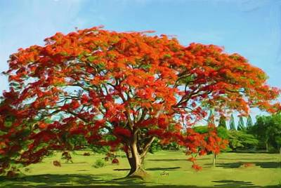 Flamboyan Painting - Flamboyan Royal Poinciana by Yiries Saad