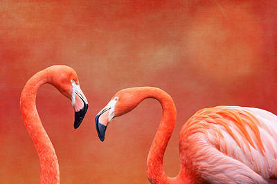 Orange Sun Photograph - Flamboyant Flamingos by Tom Mc Nemar