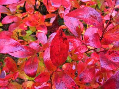 Photograph - Flamboyant Foliage by Joshua Bales