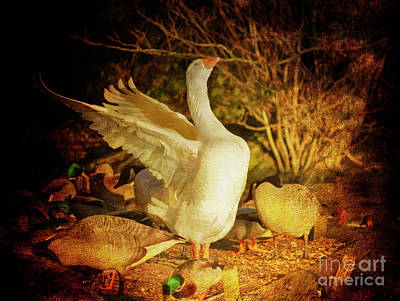 Photograph - Flamboyant Goose by Terri Waters
