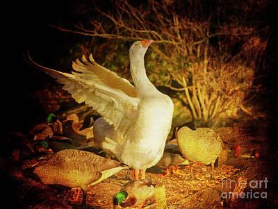 Photograph - Flamboyant Goose by Terri Waters