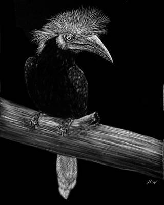 Hornbill Drawing - Flamboyant by Heather Ward