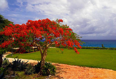 Flamboyant Tree In Grand Cayman Art Print by Marie Hicks