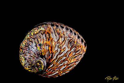 Photograph - Flame Abalone by Rikk Flohr