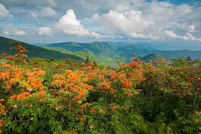 Photograph - Flame Azaleas Roan Highlands Appalachian Trail by Rick Dunnuck