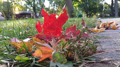 Photograph - Flame Leaf  by Zac AlleyWalker Lowing
