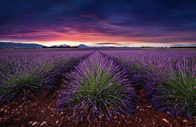 Photograph - Flame Of Doub by Jorge Maia
