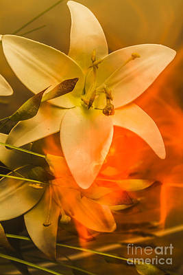 Lilies Royalty-Free and Rights-Managed Images - Flames of intimacy by Jorgo Photography - Wall Art Gallery
