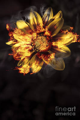 Photograph - Flames Of Passion And Intimacy by Jorgo Photography - Wall Art Gallery