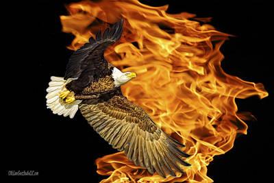 Photograph - Flaming American Bald Eagle by LeeAnn McLaneGoetz McLaneGoetzStudioLLCcom