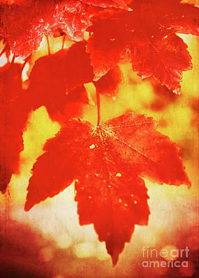 Photograph - Flaming Autumn by Anita Pollak