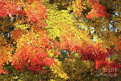 Photograph - Flaming Autumn Leaves Art by Reid Callaway
