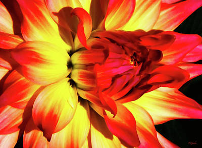 Photograph - Flaming Blossom by Tony Grider