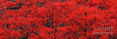 Photograph - Flaming Red Panorama By Kaye Menner by Kaye Menner