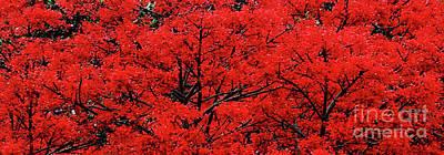 Photograph - Flaming Red Panorama II By Kaye Menner by Kaye Menner