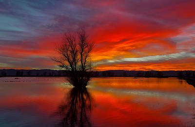 Photograph - Flaming Reflections by Kathleen Bishop