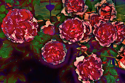 Photograph - Flaming Roses by Mick Anderson