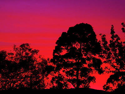 Photograph - Flaming Sunrise by Mark Blauhoefer