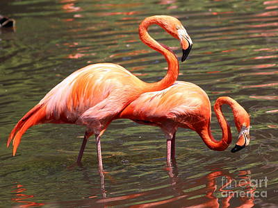 Photograph - Flamingo 1 by Four Hands Art