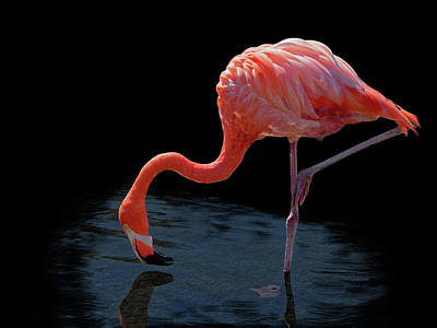 Photograph - Flamingo 1249 by Rudy Umans