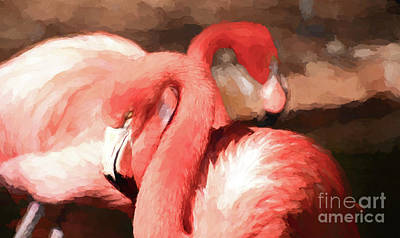 Photograph - Flamingo 2 by Andrea Anderegg