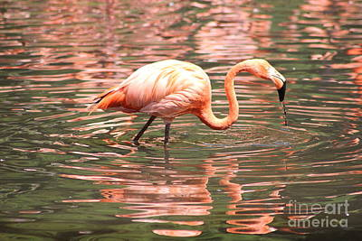 Photograph - Flamingo 2 by Four Hands Art