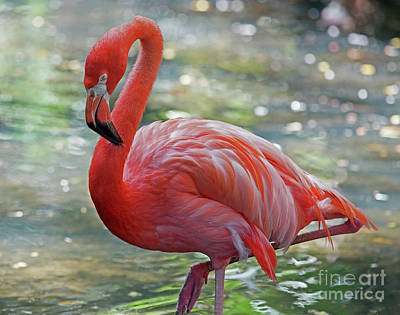 Photograph - Flamingo 2  by Larry Nieland