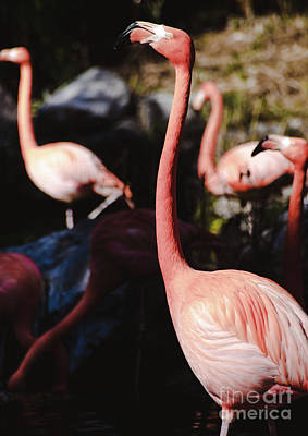 Photograph - Flamingo 3 by Andrea Anderegg