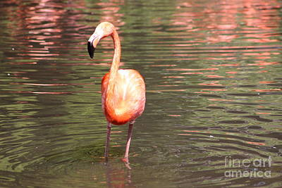Photograph - Flamingo 3 by Four Hands Art