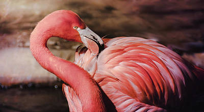 Photograph - Flamingo 6 by Andrea Anderegg