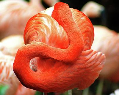 Photograph - Flamingo At Rest by Matt Harang