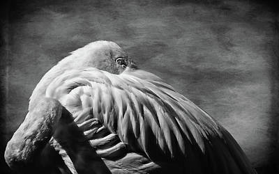 Photograph - Flamingo Black And White by Judy Vincent