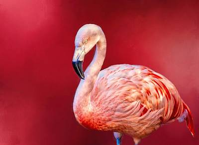Photograph - Flamingo by Ches Black
