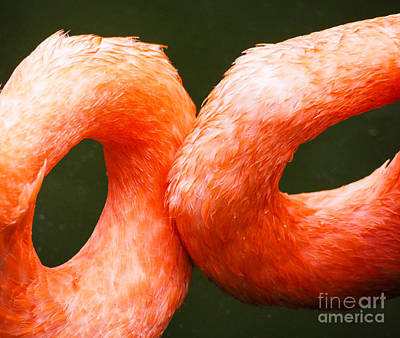 Photograph - Flamingo Circles by Robin Zygelman