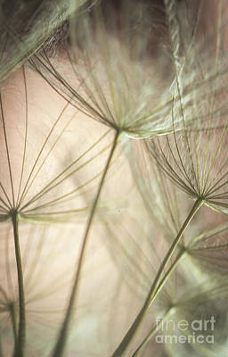 Photograph - Flamingo Dandelions by Iris Greenwell