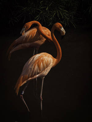 Flamingo Delight Art Print