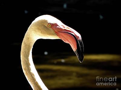 Animal Watercolors Juan Bosco - Flamingo Drinking Water from Lake by Lucas Correa Pacheco