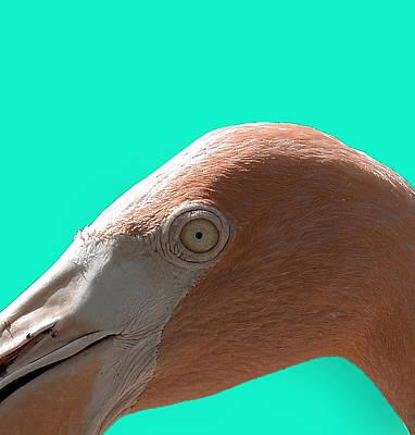 Photograph - Flamingo Eye by Richard Goldman