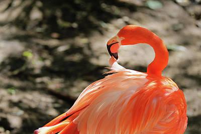 Photograph - Flamingo Feather by Jack Nevitt